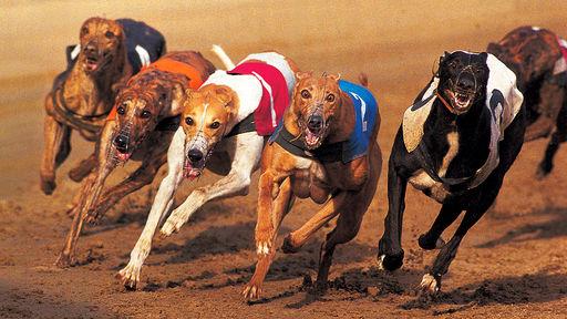 Название: dog_run.jpg Просмотров: 82  Размер: 55.0 Кб