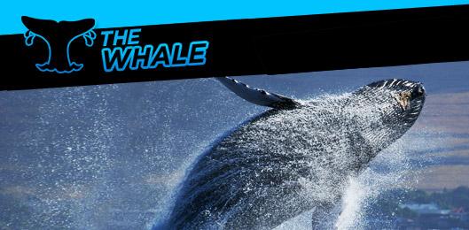 Название: the-whale-promo_v002.jpg Просмотров: 72  Размер: 106.3 Кб